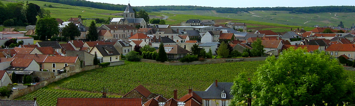 Krug's Clos du Mesnil Vineyard in the heart of Mesnil-sur-Oger