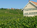 Louis Roederer Vineyard in Ay One of their Grand Cru Rated Vineyards
