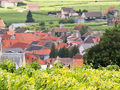 Salon Vineyards over looking the village of Le Mesnil-sur-Oger
