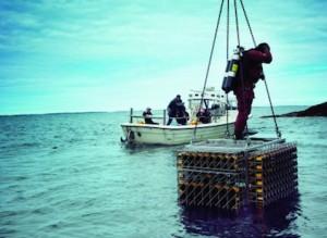 Veuve-Clicquot-Cellar-in-the-Sea-Immersion