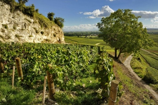 Bollinger Cote aux Enfants Vineyard in Ay