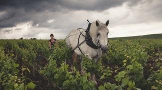 Louis Roederer biodynamic farming practices