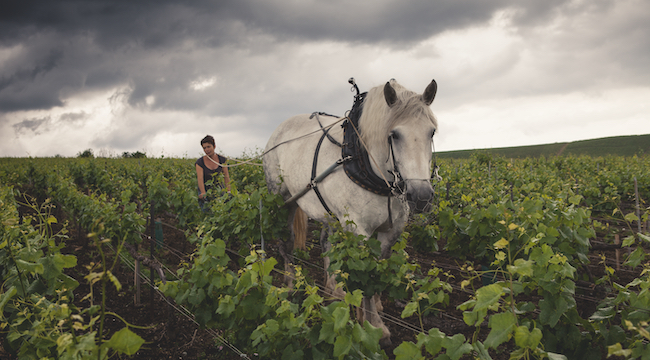 Louis Roederer Completes Organic Certification of Half Its Estate