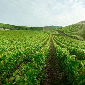 Charles Heidsieck vineyard