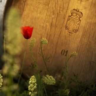 Krug oak barrels