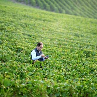 Cyril Brun walking the vineyards