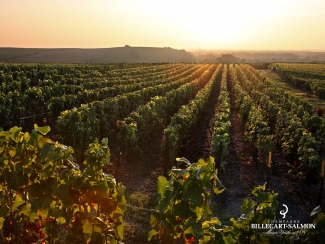 Billecart-Salmon Vineyard